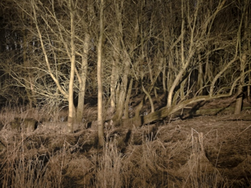 Myrkviðr, Nunwick. Why is a dark and 'murky' woodland scarry; a fear of the unknown; or a remembered children's story?